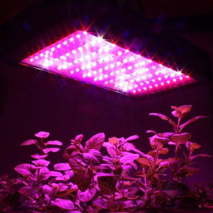 Apollo Horticulture 180/240/600/700W LED Lampe de Culture