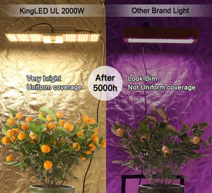 Carte Quantum LED King Plus Série UL 2000W