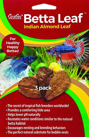 Betta Leaf Indian Almond Leaf