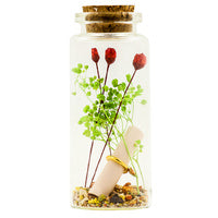 Red rose in a bottle
