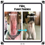 For Furry Friends P.A.W.S Pet's Activated Water Sanitizer