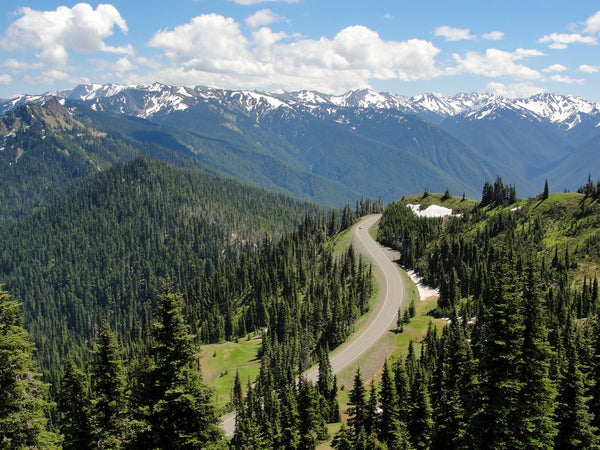 Olympic National Park - Wear Your From