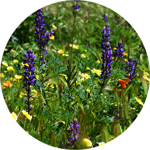 Wildflower Growing Instructions | The Jonsteen Company