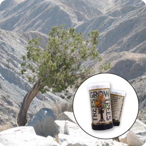 California Juniper | Mini-Grow Kit | The Jonsteen Company
