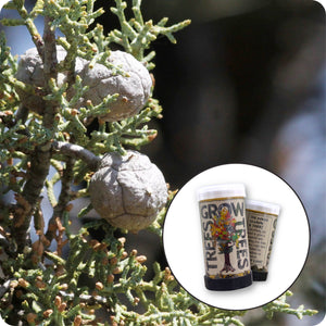 Cuyamaca Cypress | Mini-Grow Kit | The Jonsteen Company