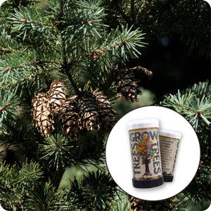 Douglas Fir | Mini-Grow Kit | The Jonsteen Company