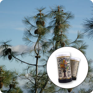 Ghost Pine | Mini-Grow Kit | The Jonsteen Company