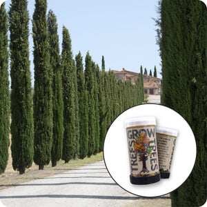Italian Cypress | Mini-Grow Kit | The Jonsteen Company