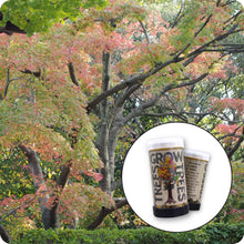 Load image into Gallery viewer, Japanese Maple | Mini-Grow Kit | The Jonsteen Company