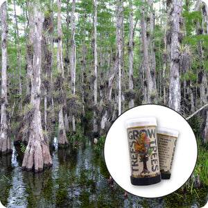 Pond Cypress | Mini-Grow Kit | The Jonsteen Company