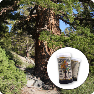 Western White Pine | Mini-Grow Kit | The Jonsteen Company