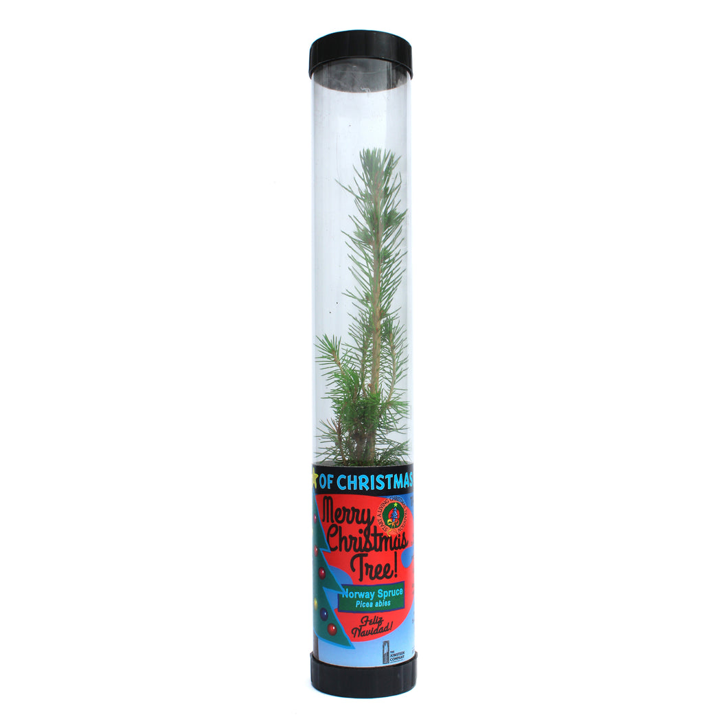 Living Christmas Tree | Norway Spruce | The Jonsteen Company