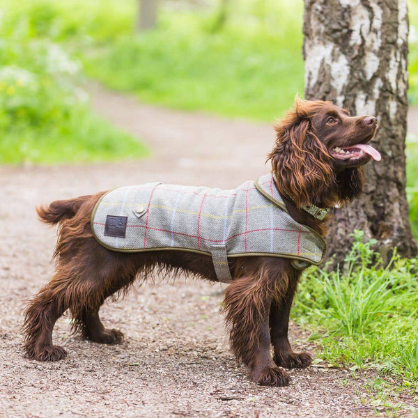 Tweedmill Dog Coat 15
