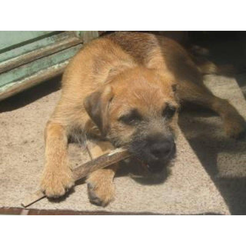 Green and Wilds Original Antler Chew - Small