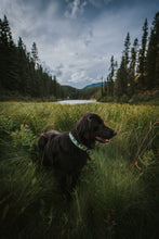 Load image into Gallery viewer, Chinook Pet Collar