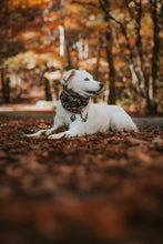 Load image into Gallery viewer, Hazan Pet Scarf