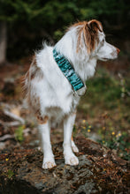 Load image into Gallery viewer, Glacier Lakes Pet Collar