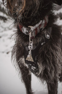 Telkwa Pet Collar