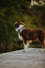 Load image into Gallery viewer, Pine Ridge Pet Collar