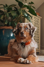 Load image into Gallery viewer, Marigold Pet Collar