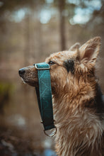 Load image into Gallery viewer, Slate Mountains Pet Collar