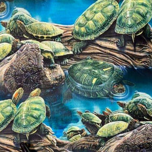 Sea Turtles 2