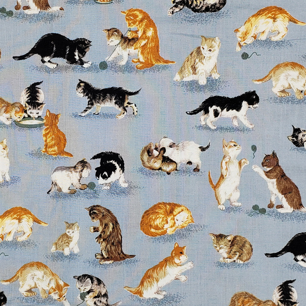 Kittens Playing Kitty cats scattered on grey