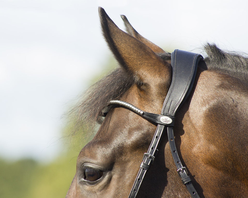 QHP Sedna Bridle - EveryDay Equestrian