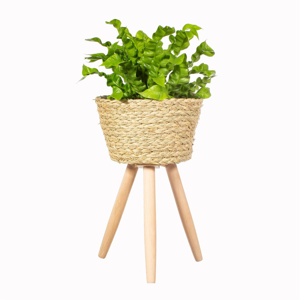 Large Basket Planter on Legs