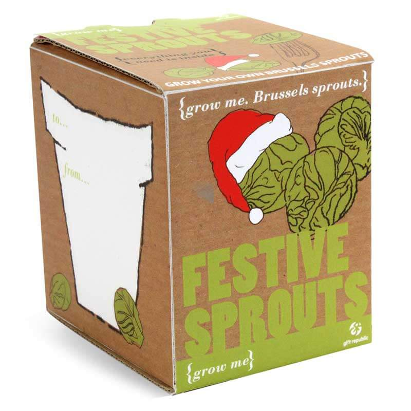 Festive Sprouts | Grow Your Own