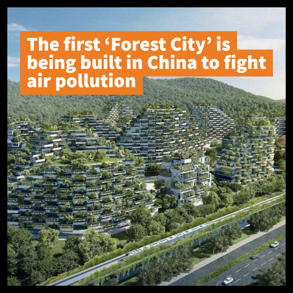 The first 'Forest City' is being built in China to fight air pollution - Life Before Plastik