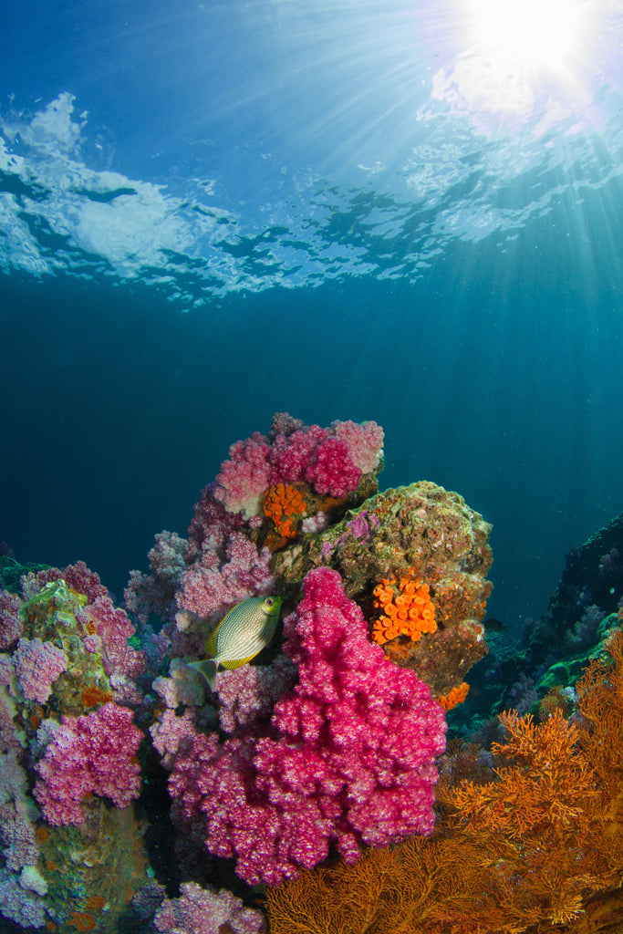 Coral Reefs are vital for our ecosystems