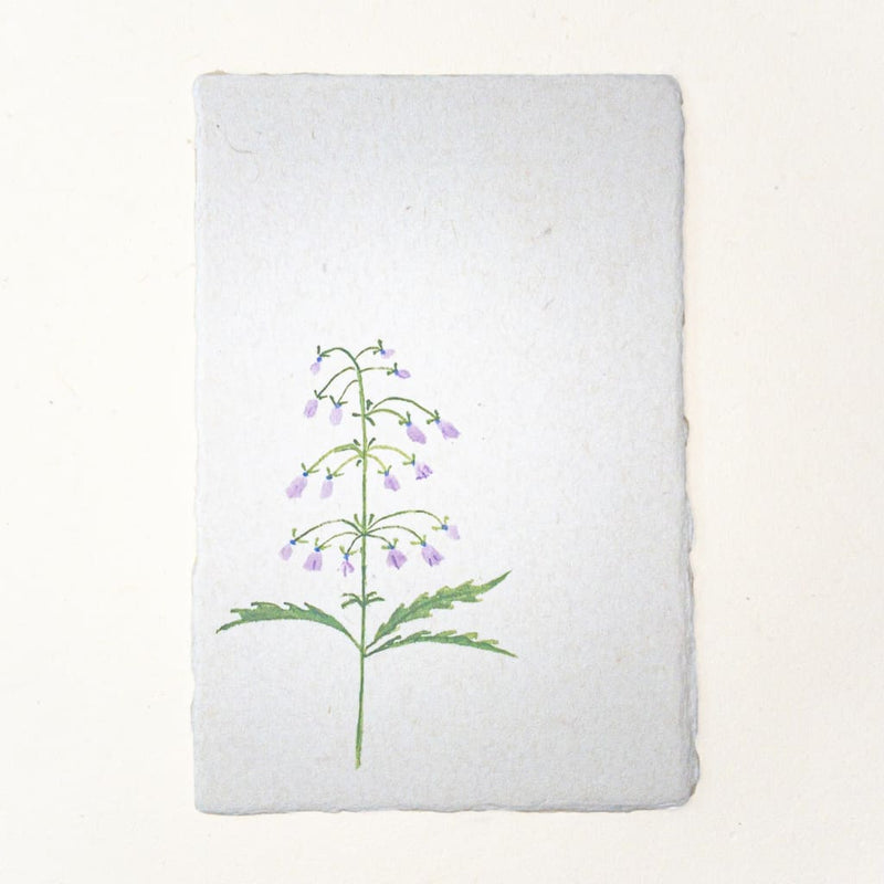 Hand painted Canterbury Bells Flower postcard 20% OFF - Cards Japanese Stationery