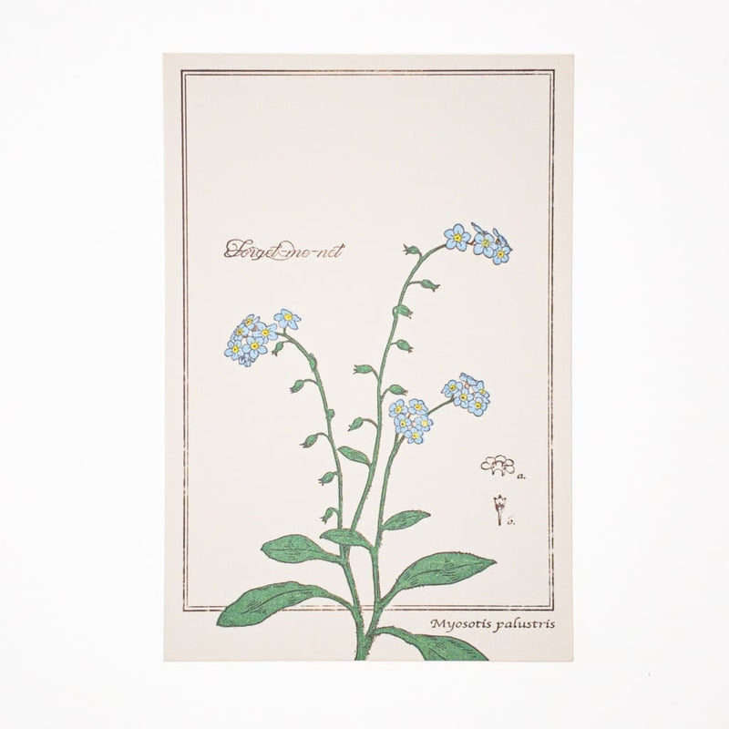 Letterpress Forget Me Not Postcard - Cards Japanese Stationery