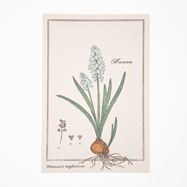 Letterpress Hyacinth Postcard - Cards Japanese Stationery