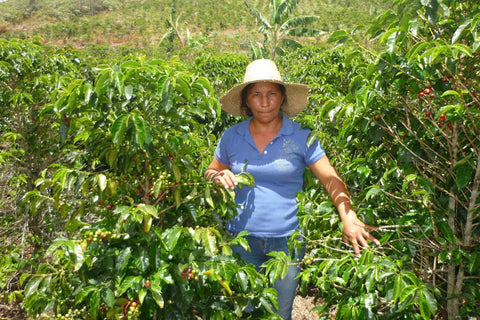 Colombian  - Women Coffee Producers