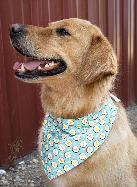Birthday Balloon and Bones Double Sided Bandana! - The Dapper Dog Box