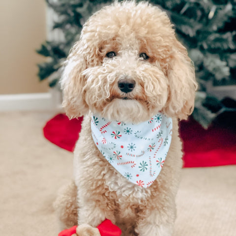 Dapper Dog Box Premium Bandana Subscription - The Dapper Dog Box