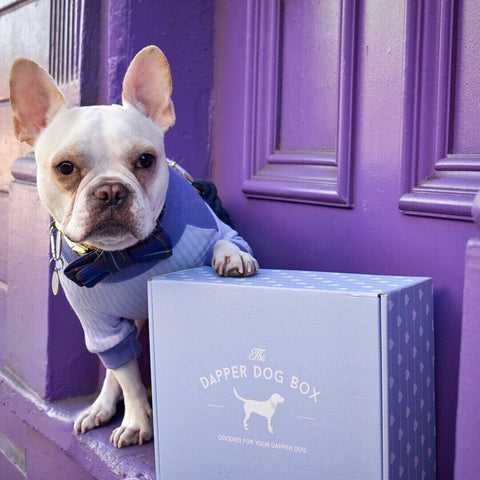 The Dapper Dog Gift Subscription Box - The Dapper Dog Box