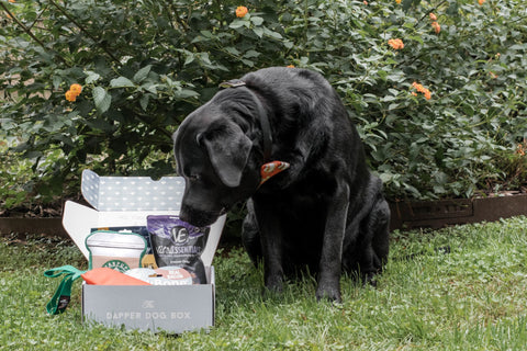 The Dapper Dog No-Treat Subscription Box - The Dapper Dog Box