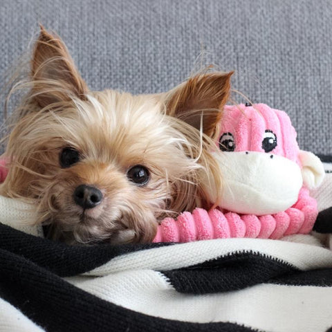 ZippyPaws Spencer the Crinkle Monkey - Small Pink - The Dapper Dog Box