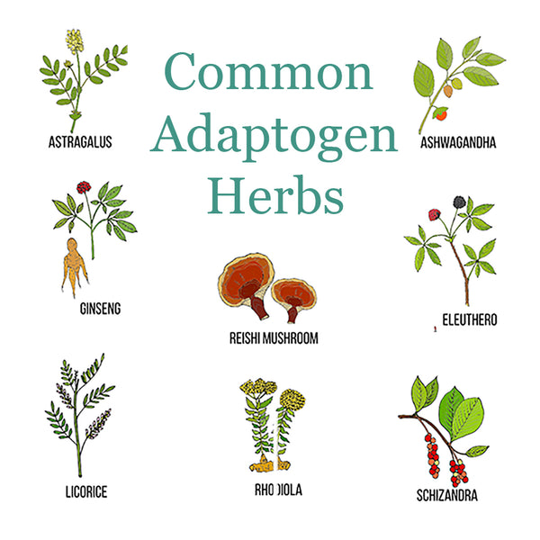 Can Everyone Take Adaptogen Herbs Safely?