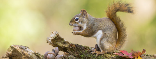 Why Squirrels are the Wonders of the Woods