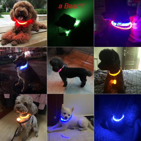 Glowing-Dog-Collar