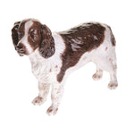 English Springer Spaniel Liver/White