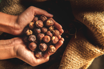 Soapnuts, An Academic Research