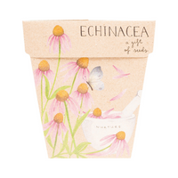 SOW 'N SOW Gift of Seeds Echinacea