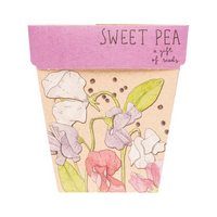 SOW 'N SOW Gift of Seeds Sweet Pea