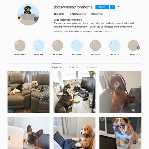 Dogs Working From Home Instagram
