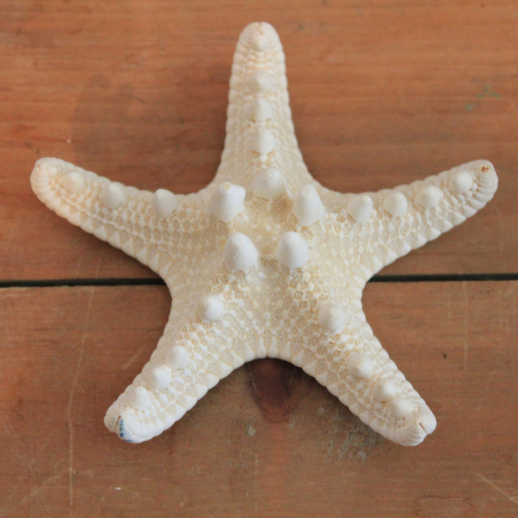 Seashell Star